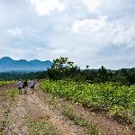 The view of Gede-Pangrangro from Rumah Kaca