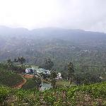 View of hotel from tea plantation