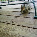 squirrel on back deck