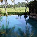 The magical pool!