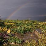 Rainbow over our Gardens