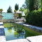 Piscine et en 1er plan bassin avec des plantes