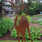 see through stag