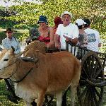 Ox-cart Tour