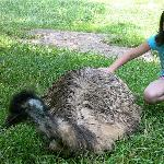 Petting emu...not a beautiful bird tho