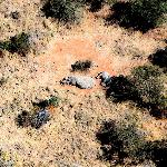 Mother and baby rhino spotted from ultralight! The last of the Big Five!