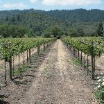Vineyard Shot 2