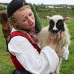 One of the workers who had to round up a lamb that had squeezed through the fence