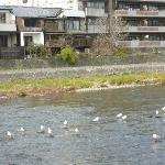 The river behind hotel to feed birds