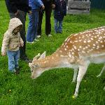 We took our grandkids to the Black Pine Deer Farm up in Donnelly, just 20 min. north of Ashley I