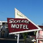 skylark sign