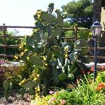 Brezza d'Estate - giardino