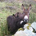 Donkeys in Connemara