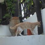 petit chat qui se ballade sur notre balcon