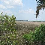 part of a marsh land