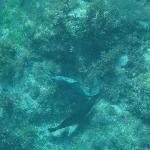 Conceição Beach marine life - moray eel