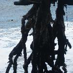 Große Baumwurzel am dichtgelegenen Strand