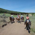 Our bunch; showing the sagebrush as well as the forested hill