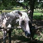 il cavallo Ciccio