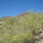Sonoran Desert mountain behind hotel.