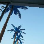 looking up at the blue palm trees by the pool
