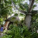 Garden of Dos Ceiba Posada