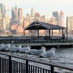 Seagulls?