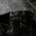 giant tortoise at Rancho Principia