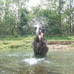 elephant bath in river