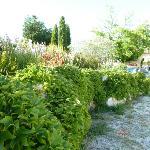 Beautiful garden along driveway