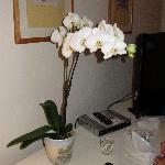 Hilda doesn't forget the details...beautiful live orchids!