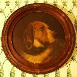 Heirloom dog portrait from Elgin Plantation.