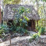 Cottage Iguana