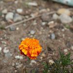 More flowers in garden