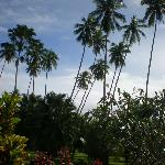 view from porch---yep, looks like Fiji