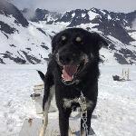 Aurora Sled Dog Tours
