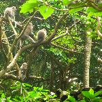 Monkey forest4