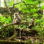 Monkey forest5