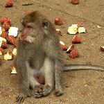 Monkey @ monkey forest
