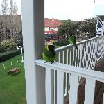 Even the birds thought it was worth visiting my room