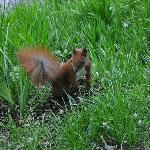 Cute red squirrel in the park