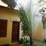 big palm outside my room