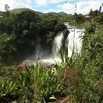 Lily Waterfall