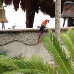 birds next door