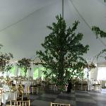 A peek at our reception tent decor, created by Floral Fantasies by Sara.