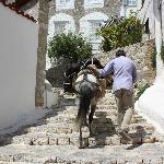 Donkey packing our bags