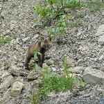 ein kleiner Fuchs