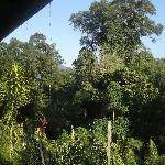 The jungle from the veranda