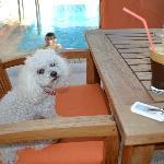 my puppy having coffee