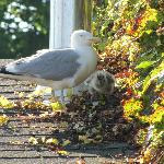 Mama seagull and chick entertained us on the roof deck